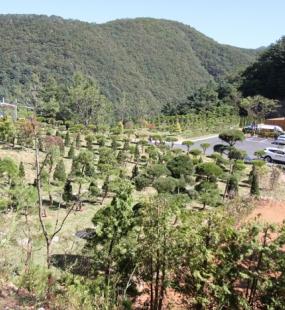 북한강 수목장