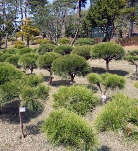 김포 수목장추천